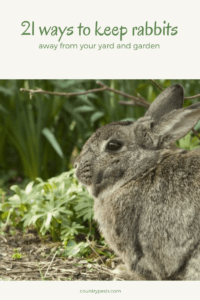 9 Effective Ways To Keep Rabbits Out Of Your Yard And Garden