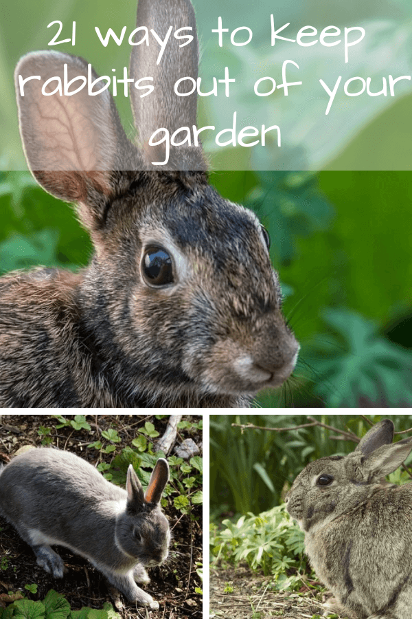 how to keep rabbits out of your yard 2 - Country Pests