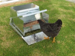 Automatic Chicken feeder eliminates Mouse and rat attraction