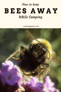 How To Keep Bees Away From My Campsite: The Complete Guide