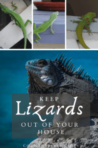 Keep lizards out of your house (1)