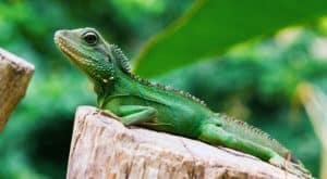 Lizards like warm areas
