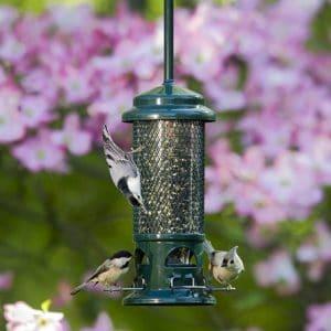Squirrel Free bird feeder