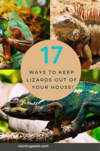 keep lizards out of your home (1)